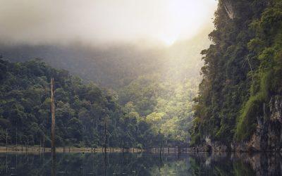 Deštné pralesy