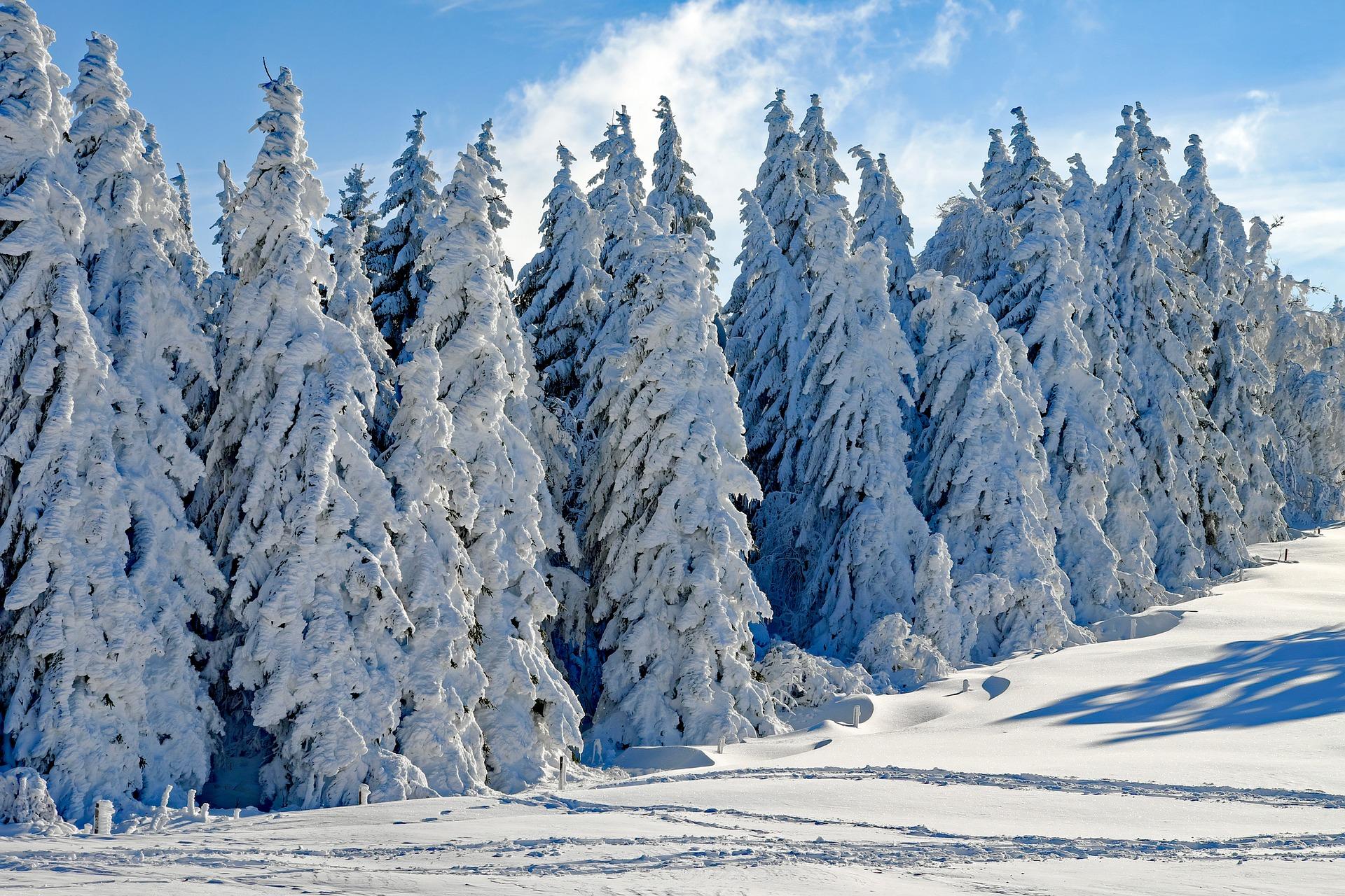 zimni cas