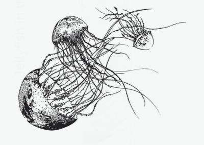 Skleněná lahev - Medúza