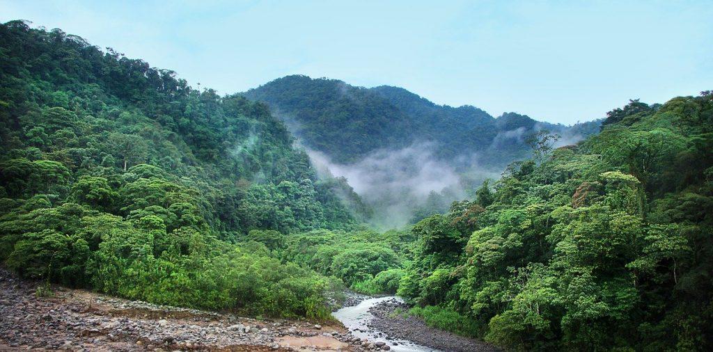 Deštné pralesy 1